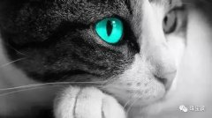 猫眼石款式种类【猫眼石】
